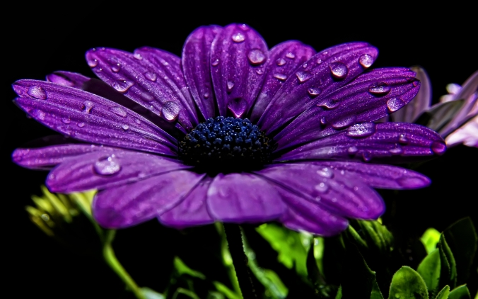 4452262-purple-flowers-wallpapers
